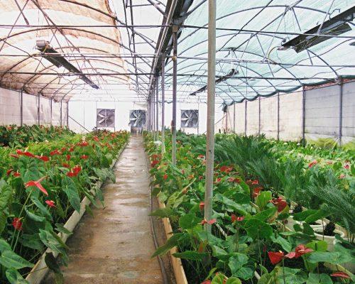 گرماتاب در گلخانه